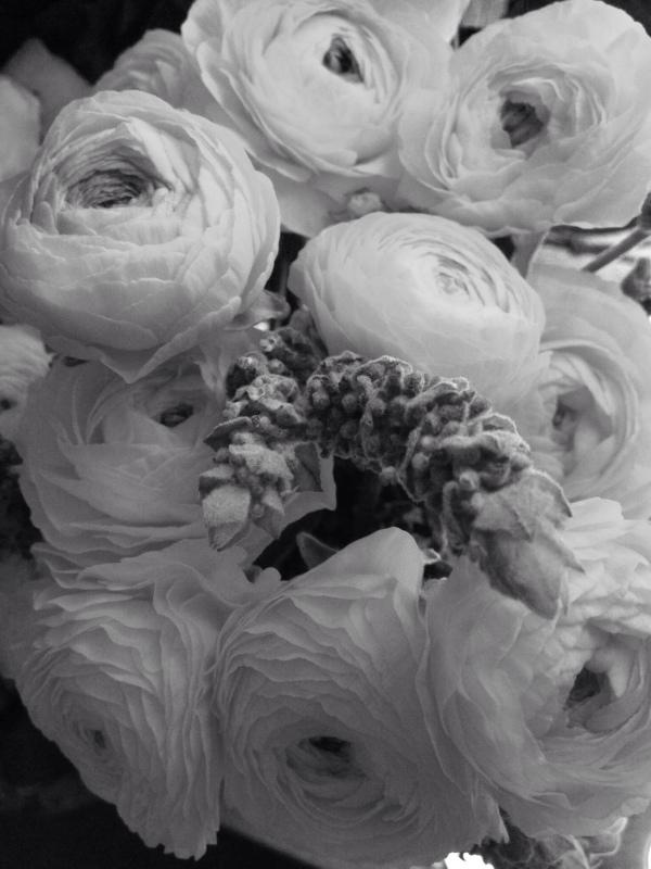 lavendernranunculus.jpg