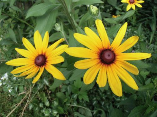 Blog Photo - flowers for Sister Yellows 1