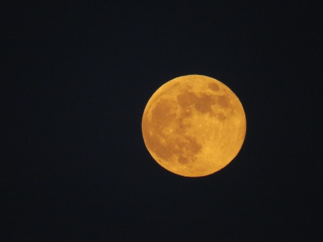 September Harvest Moon